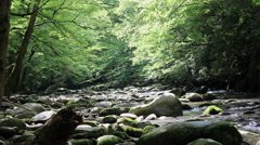 Stock Video Footage of mossy rocks appalachian river butterflies