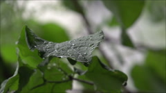 Raining on a Leaf in Super Slow Motion - stock footage