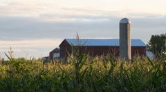 Cornfield Barn and Silo Stock Footage