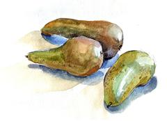 pears watercolor - stock illustration