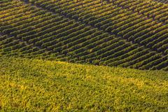 Autumnal vineyards of Langhe, Italy. - stock photo
