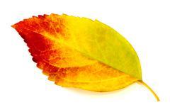 Colorful autumn leaf isolated Stock Photos