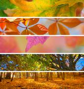 Collection of Autumn Banners -  fall season abstract  backgrounds - stock photo
