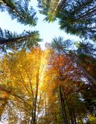 Autumn Leaves and trees with sunbeams - beautiful sesonal  background, fall i - stock photo