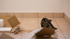 Kitten playing with piece of Styrofoam Stock Footage