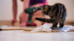 Kitten sit on plastic bag from furniture elements Stock Footage