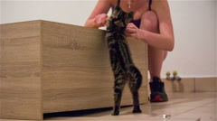 Kitten annoying owner while nailing in to wood - stock footage