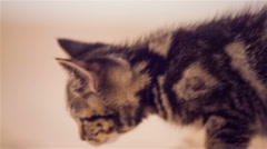 Cute kitten exploring at home close up Stock Footage