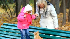 Little girl and homeless orange cat in autumn park. Fuuny chid scared by cat. Stock Footage