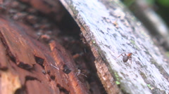 Ants crawling on a log Stock Footage
