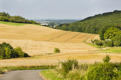 A road leading into golden rye fields in beautiful light on hills in northern Stock Photos
