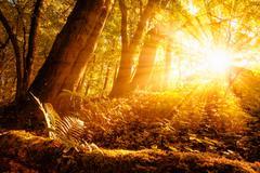 Sunny autumn scenery in the forest Kuvituskuvat