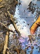 Polluted wetland water with needles and branches Stock Photos