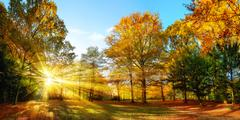 Sunny autumn scenery in an idyllic park Stock Photos