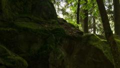 Sunlight from behind huge mossy rocks, broadleaf tree, breeze, time-lapse Stock Footage