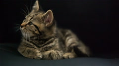 Baby cat lay on black background Stock Footage