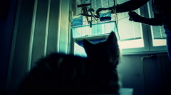Cat laying in front of bird cage Stock Footage