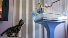 Playful kitten afraid to jump on bird cage - stock footage
