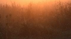 Marsh Morning Glow Stock Footage