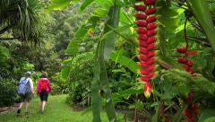 Two Women Walking in the Rainforest in Maui Stock Footage