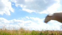 Sheep walking past in a field Stock Footage
