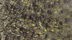 Salmon, Fish, River, Spawn, Pacific Northwest - stock footage