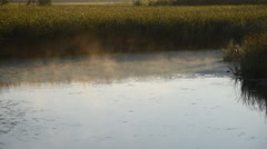 Stock Video Footage of Cattail in Morning Mist