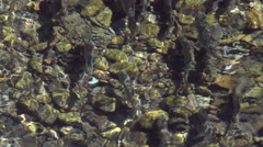 Salmon, Fish, River, Spawn, Pacific Northwest Stock Footage