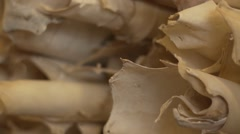 Parchment Rolls Close Up Stock Footage