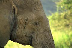 Close up of an elephant Stock Photos