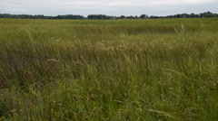Wind in the Marsh Grass Stock Footage
