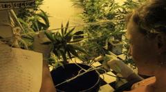 Cute girl in grow room looking at marijuana as she cuts Stock Footage