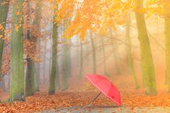 Red umbrella in autumn park on leaves carpet. - stock photo