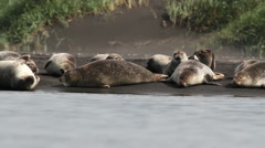 Seals on the coast of Iceland Stock Footage