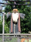 Pumpkin scarecrow Stock Photos