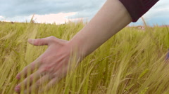 Farmer touching wheat in field, organic crops, farming labor, rural landscape Stock Footage