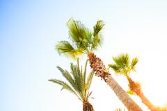 Palm trees in a row Stock Photos