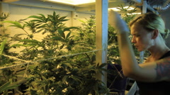 Pretty girl trimming plants in marijuana grow room Stock Footage