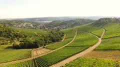 Vineyards in Stuttgart, Germany Stock Footage