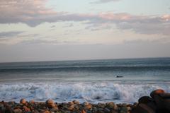 Dolphin Near the Beach Kuvituskuvat