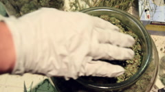Medical marijuana being sifted through by hand with glove - stock footage