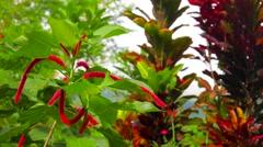 Flowers in tropical garden. 4K resolution Stock Footage
