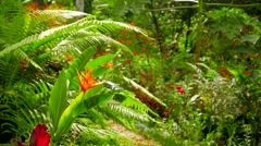 Tropical garden in morning light. 4K resolution. Stock Footage