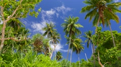 Tropical island greenery, palm trees with blue sky and clouds. 4K resolution Stock Footage