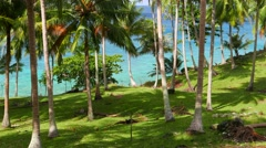 Lush palm tree grove with turquoise sea in the background. 4K resolution Stock Footage