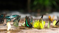 Colorful butterfly's in natural sanctuary Stock Footage