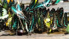 Many colorful butterfly's in nature Stock Footage
