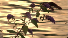 Flower and sea at the sunset: warm colors Stock Footage