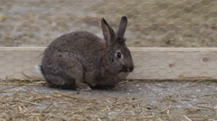 Cute Easter Bunny Rabbit Stock Footage