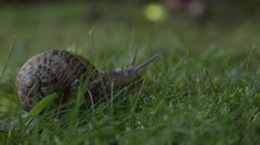 THE WAY SNAIL Stock Footage